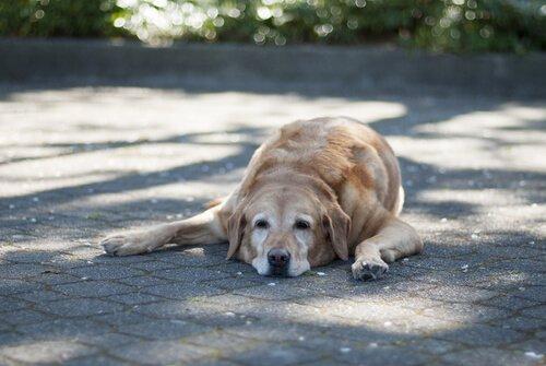 cão deitado na rua
