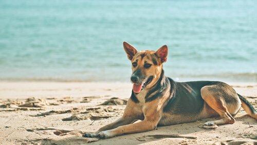 Por que seu cachorro se deita ao sol?