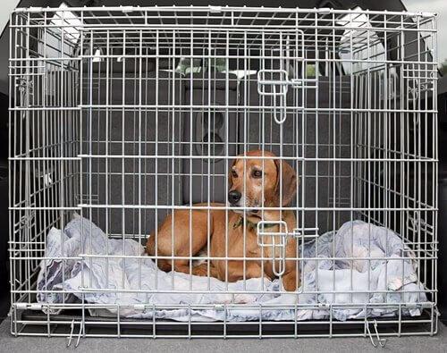 Cachorro numa caixa de transporte