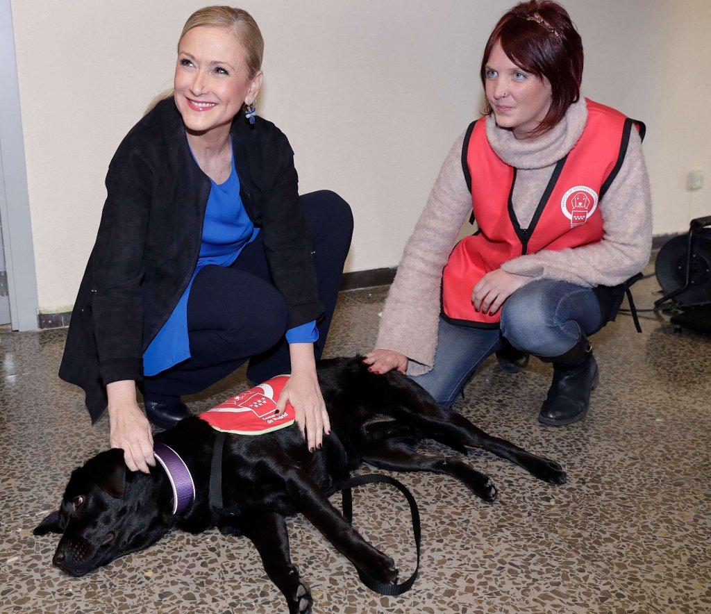 cães e veterinários