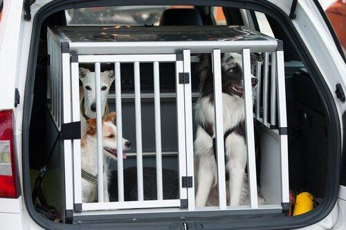 Viajar com caixa de transporte