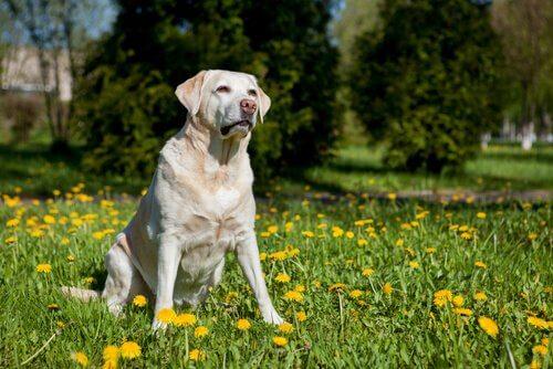 cão num campo florido