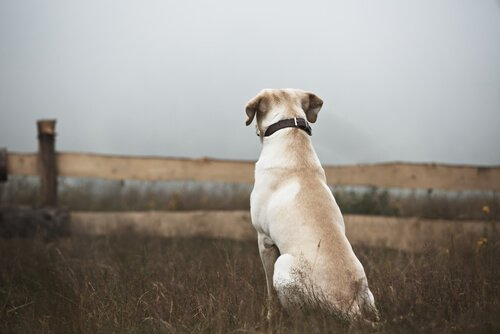 Cão perdido: o que fazer?