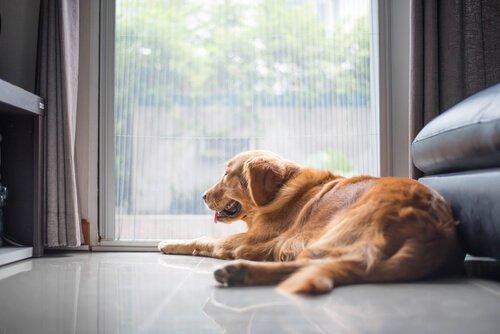 Algumas formas do seu cão ajudar em casa