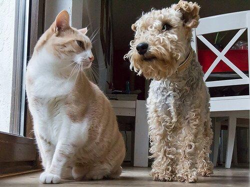 Cachorro e gato podem ser amigos