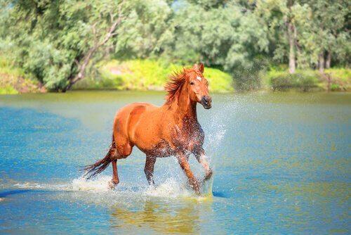 Cavalo correndo na água