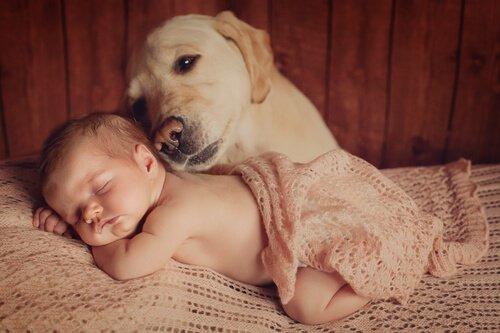 Apresentar o bebê ao seu animal de estimação