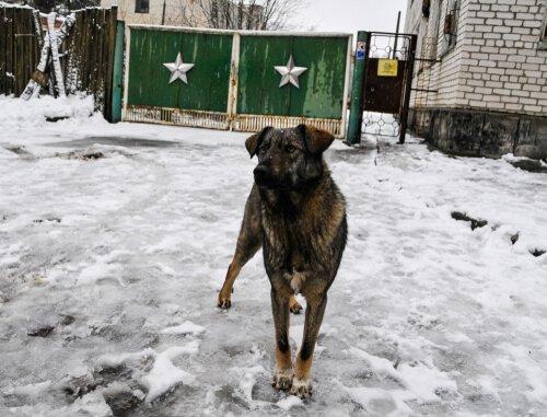 Cachorro em Chernobyl