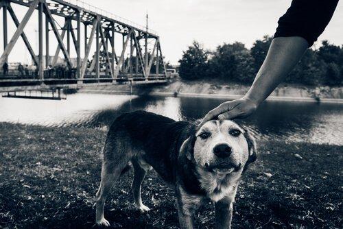 Os últimos cães de Chernobyl
