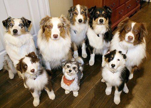 Os cães podem ser clonados?