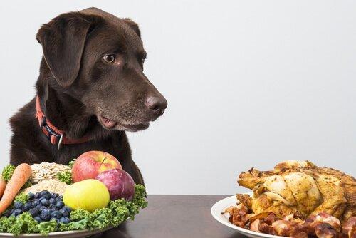Cachorro diante de prato com frutas e legumes e galeto