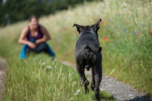 Dona chamando o cão