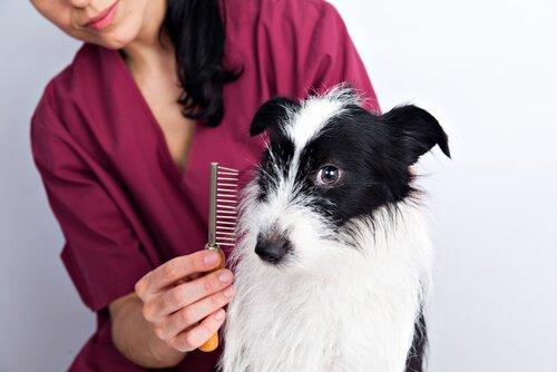 Dona escovando seu cachorro