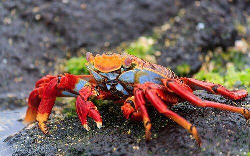 O que são os crustáceos?