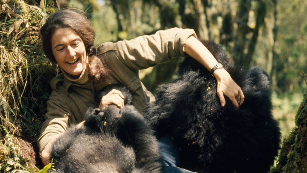 Quem foi Dian Fossey?