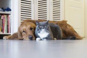 Cachorro e gato são amigos