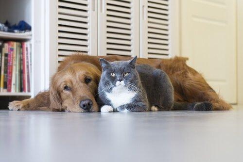 Doenças mortais em cães e gatos