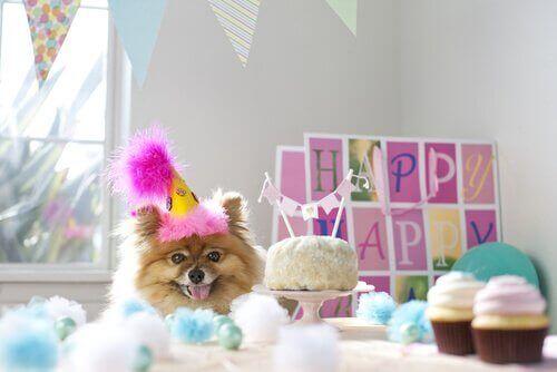 Aniversário de cachorro