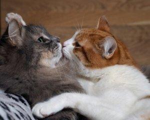 gato brigando