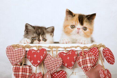 Gatinhos dentro de cesta