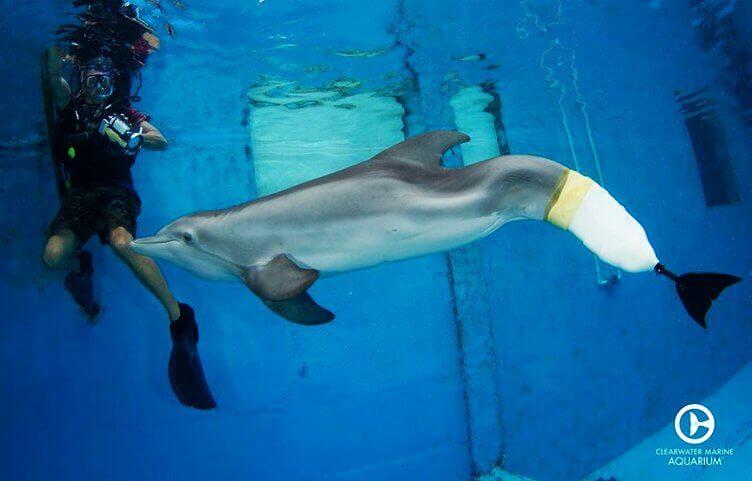 golfinho com prótese