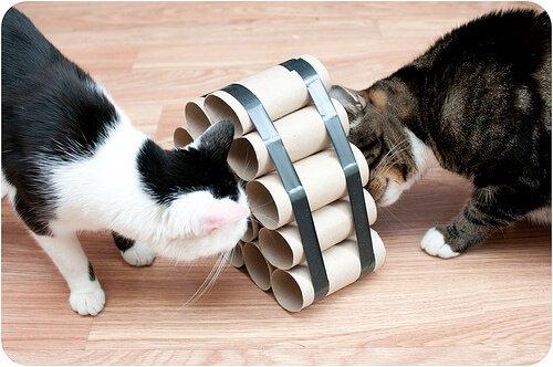brinquedos caseiros para gatos