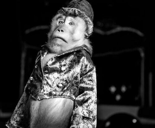macaco com sobrero