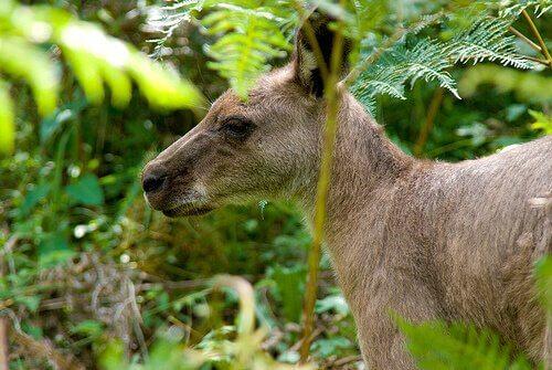 marsupial na selva