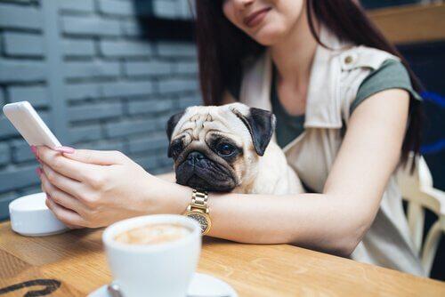 Millennials e animais de estimação: uma relação atípica