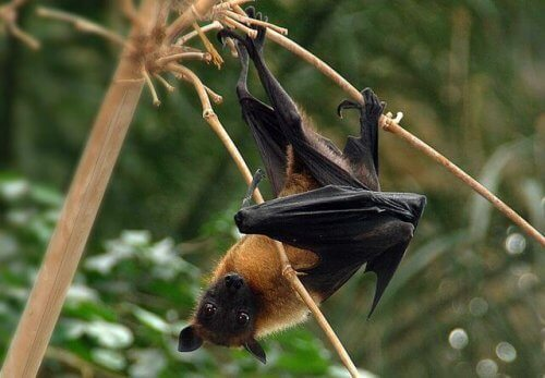 Os morcegos são perigosos para as pessoas?
