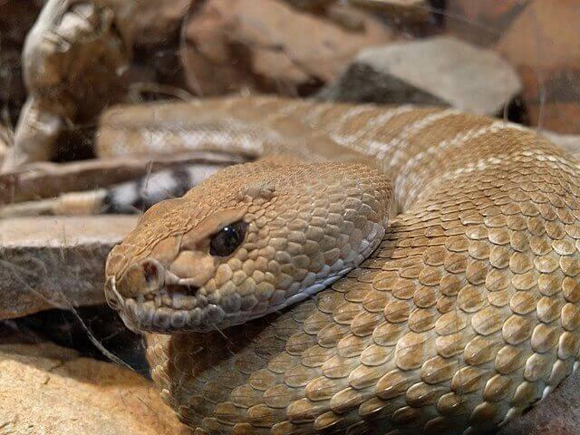 Problemas na muda de pele das cobras