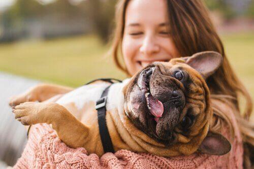 Cachorro feliz no colo da dona