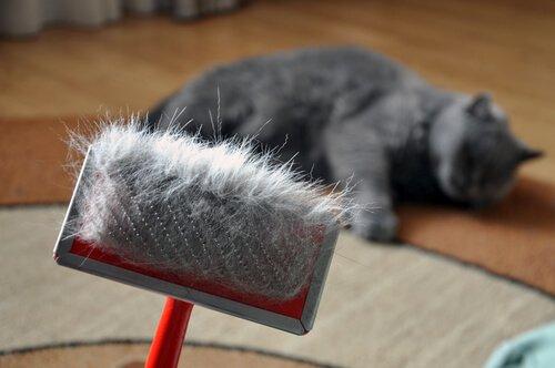 Os perigos da muda de pelo nos gatos