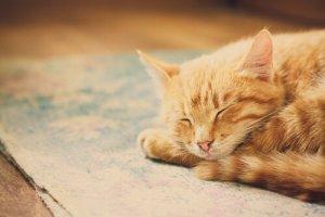 gato dormindo