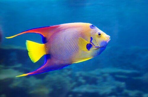 8 peixes de água doce