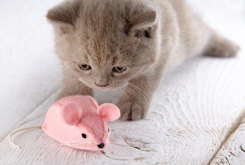 Gatinho brincando com rato de pelúcia