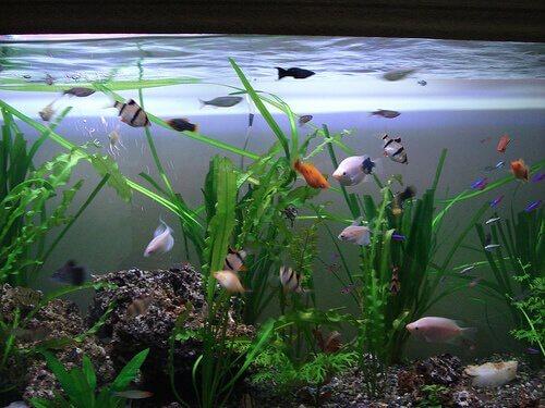 Como escolher as plantas para um aquário?