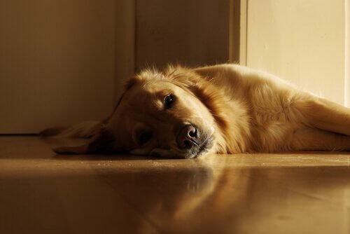 cão tomando sol