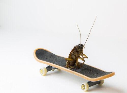 Soluções para a praga das baratas