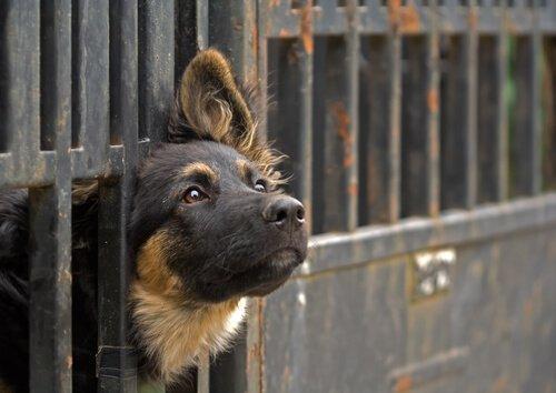 Requisitos para adotar um animal