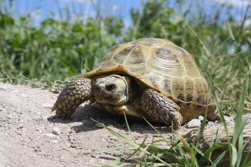 Tartarugas domésticas: 4 tipos