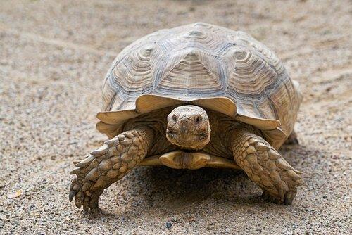 Conheça aqui 9 animais omnívoros: tartaruga
