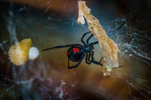 Como são produzidas as teias de aranha?