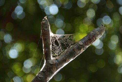Como são feitas as teias de aranha?