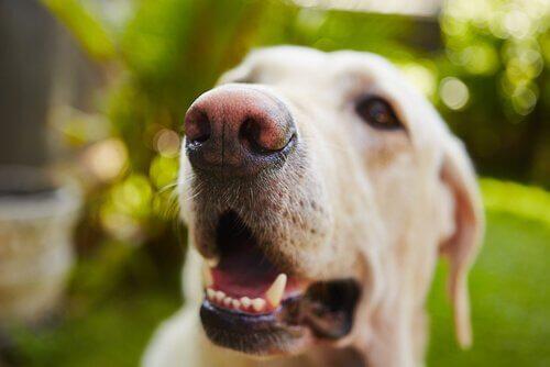 Cachorro com dentes saudáveis