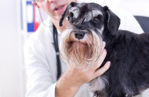 cão com veterinário
