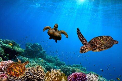 7 destinos para ver animais selvagens em liberdade