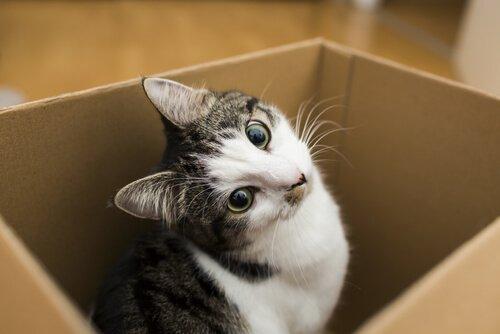 gato numa caixa