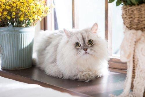 A adaptação do gato no novo lar