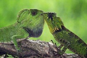 animais de um par só